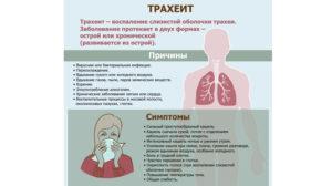 Симптомы трахеита и эффективные методы лечения болезни