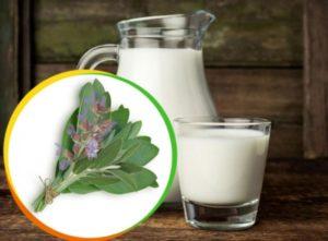 Шалфей с молоком от кашля: приготовление и применение
