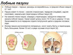 Околоносовые пазухи пневматизированы: норма и патология