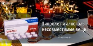 Совместим ли Ципролет с алкоголем и какими могут быть последствия?