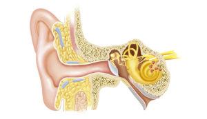 Кружится голова и закладывает уши: причины, диагностика и лечение