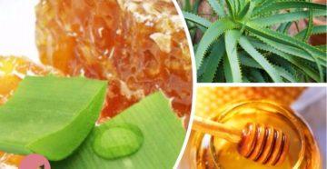Алоэ с медом от кашля: лучшие рецепты для детей и взрослых